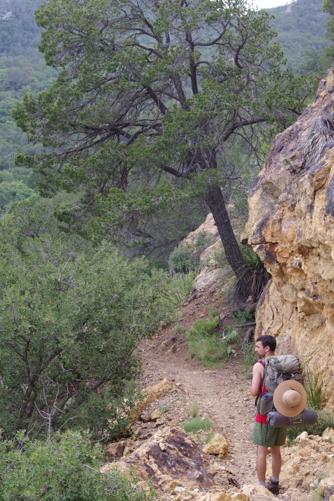 Surprising plants such as junipers, oaks, and even douglas firs frame the rocky trails