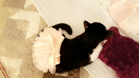 Tiny tot makes an excellent model for frilly gifts - Thanks, Mom!